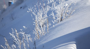 Yellow grass in snow Stock Photography