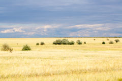 Yellow grass in the steppe and blue sky. Photo for you Stock Photography