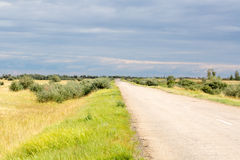 Yellow grass in the steppe and blue sky. Photo for you Royalty Free Stock Photography