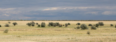 Yellow grass in the steppe and blue sky. Photo for you Royalty Free Stock Photos