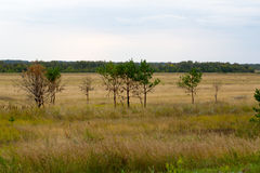 Yellow grass in the steppe and blue sky. Photo for you Stock Photo
