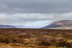 Yellow grass on a stony rocky desert landscape of Iceland.  Royalty Free Stock Photos