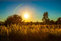 Yellow grass on sunset Stock Photo