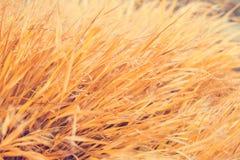 Yellow grass texture Stock Photos