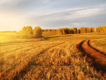 Yellow grass and trees. Against the setting sun with a bright light Royalty Free Stock Images