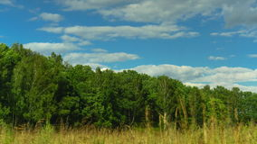Yellow grass, trees and clouds time lapse video. Moscow region of Russia clip stock video footage