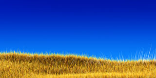 Yellow grass under blue sky Royalty Free Stock Photo