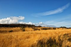 A view of Woodbury Common in Devon. This yellow grass is visible after a fire destroyed the common area previously royalty free stock photography