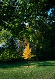 Yellow in the green. Illustrations,autumn landscape stock photo