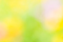 Yellow and green abstract natural background royalty free stock image