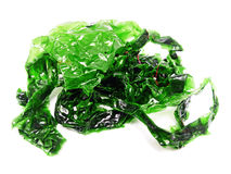 Yellow-green algae Stock Image
