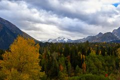 Yellow-green autumn forest on the background of the mountains royalty free stock photos