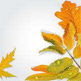 Yellow and green autumn leaves background Stock Photography