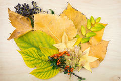Yellow, green autumn leaves, berries and seeds. Stock Images