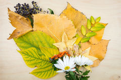 Yellow, green autumn leaves, flowers, berries and seeds. Royalty Free Stock Photos