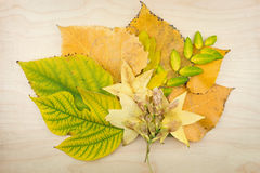Yellow, green autumn leaves and seeds. Stock Images