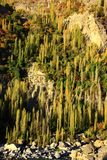 Yellow and Green of autumn trees on hillside royalty free stock photos