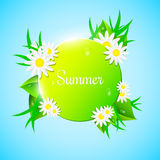 Yellow-green banner in the summer style. Fresh leaves and grass look out in the background. Drops of dew flow down the leaves. Bea. Utiful flowers. Chamomile Stock Photography