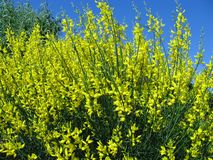 Yellow green and blue in nature Stock Photo