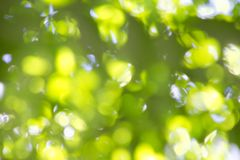 Yellow and Green Blurry Leaf Background Stock Photos