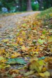 Beautiful yellow and brown leaves lie on the ground in the park royalty free stock photo