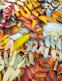 Autumn leaves. Yellow, green, brown, withered and not very autumn leaves underfoot stock photo
