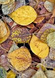 Autumn leaves. Yellow, green, brown, withered and not very autumn leaves underfoot royalty free stock images