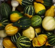 Small Cabbages and pumpkins stock image