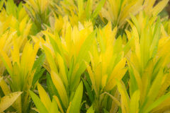 Yellow and green color plant textured Stock Photography