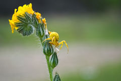 Yellow on green Royalty Free Stock Photography