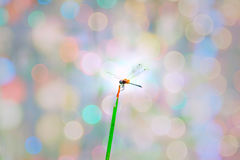 Yellow and Green Dragonfly Stock Images