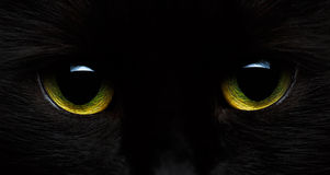 Yellow-green eyes of a black cat. Close-up stock images