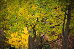Yellow and Green Fall Colors Stock Images