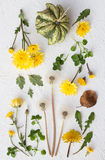 Yellow and Green Fall Still Life. On a White Background Royalty Free Stock Photos