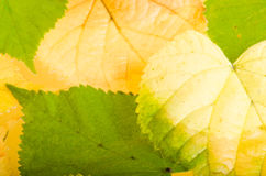 Yellow and green fallen down leaves Royalty Free Stock Photos