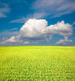 Yellow green field and blue sky Royalty Free Stock Photography
