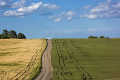 Yellow and green field with dirt road between contrast Royalty Free Stock Photo