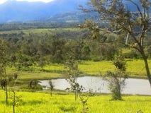 Yellow-green field encircle a lake Stock Photo