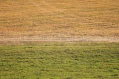 Yellow and green fields with the horizon Royalty Free Stock Images