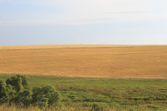 Yellow and green fields with the horizon Royalty Free Stock Image