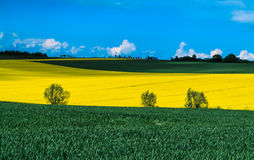 Yellow and green fields Stock Photography