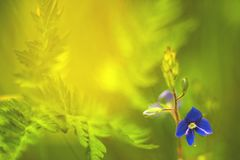 Yellow-green floral background and blue flower Royalty Free Stock Photo