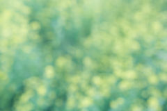 Yellow green floral bokeh background, lens blur Royalty Free Stock Image