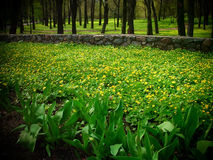 Yellow-green floral carpet Royalty Free Stock Images