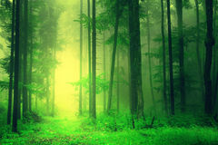 Yellow green forest light Royalty Free Stock Images