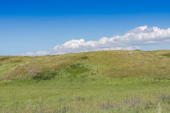 Yellow-green hill and sky with clouds. Wild grasses. Royalty Free Stock Photos