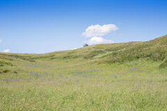 Yellow-green hill and sky with clouds. Wild grasses. Royalty Free Stock Image