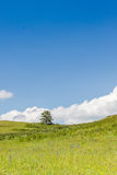 Yellow-green hill and sky with clouds. Wild grasses. Royalty Free Stock Photography