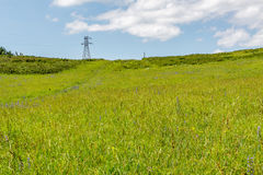 Yellow-green hill and sky with clouds. Wild grasses. Stock Photo