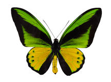 Yellow and green large isolated butterfly. Macro photo of green and yellow butterfly isolated on white background stock photo